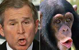 george Bush or chimp